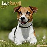 Jack Russell Calendar - Jack Russell Terrier Calendar - Dog Breed Calendars 2017 - Dog Calendar - Calendars 2016 - 2017 wall calendars - 16 Month Wall Calendar by Avonside