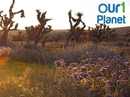 Our1Planet - Season 1