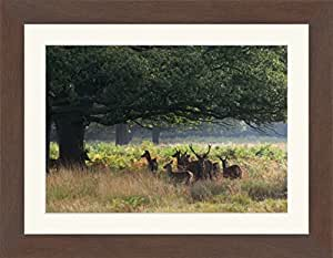 Select Frames Walnut Collection - HandMade Wooden Picture Or Photo Frames With A Mount *Pick Your Size*