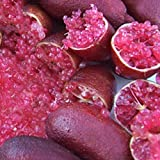 Best Garden Seeds Original Imported Rose Red Finger Lime Pomegrante Plant seeds, 10 seeds, professional pack, a must for garden rare plant
