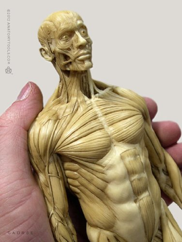 List Of Anatomy Human Figure Mannequins For Artists Parka Blogs