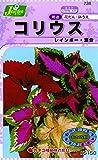 カネコ種苗 草花タネ738 コリウス レインボー 混合 10袋セット