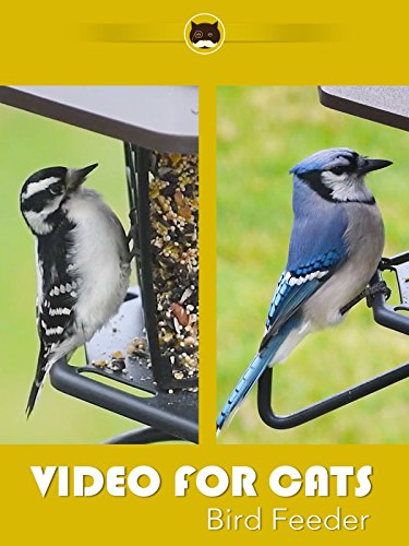 Video for Cats Bird Feeder