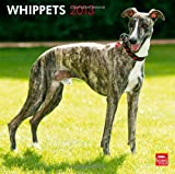 BrownTrout Publishers Whippets 2013 Wall: Kleine Englische Windhunde