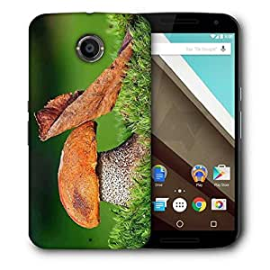 Snoogg Mushroom And Dried Leaf Printed Protective Phone Back Case Cover For LG Google Nexus 6