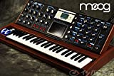 MOOG モーグ / Minimoog Voyager Select Series Blue/Quarter Sawn