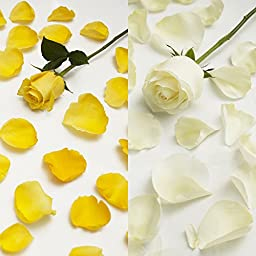 Farm Fresh Natural White - Yellow Rose Petals - 3000 petals