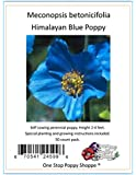 50 Poppy Flower Seeds. Himalayan Blue Poppies. Meconopsis Betonicifolia. One Stop Poppy Shoppe® Brand.