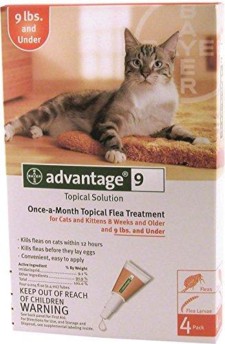 cat litter box for big cats