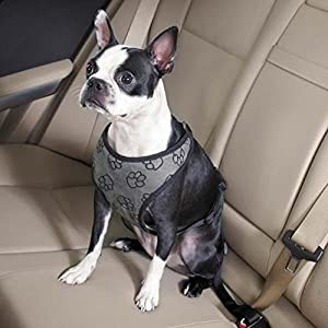 Guardian Gear Paw Print Car Pet Harness, Small/Medium, Charcoal