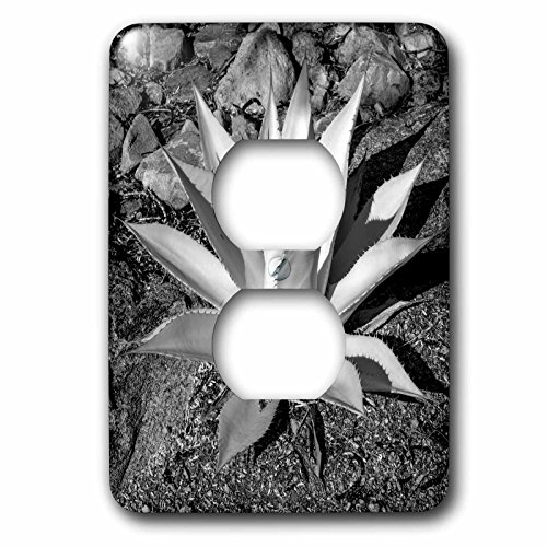 danita-delimont-plant-usa-arizona-scottsdale-mayo-clinic-campus-light-switch-covers-2-plug-outlet-co