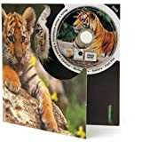 Tiger DVD Theme Card - Blank Greetings Card For Any Occasion