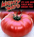 Mighty 'Mato Grafted Brandywine Tomato Plant - Easy to Grow/More Fruit