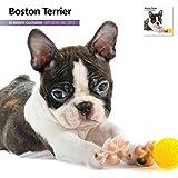 Magnet & Steel Ltd Boston Terrier Modern 2015 Calendar