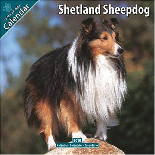 Sterling Silver Sheltie earrings, Shetland sheepdog earring