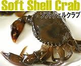 【ソフトシェルクラブ:1kg Mサイズ】マングローブで育った天然の蟹!高級食材!脱皮したての蟹!SoftShellCrab! ランキングお取り寄せ