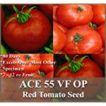 ACE 55 Tomato seeds - GREAT HEIRLOOM - Vigorous, semi-determinate ~ 7 - 12 oz Fruits - 80 Days (01500 seeds - 1/8 oz)