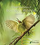 img - for A Visual Celebration of Borneo's Wildlife book / textbook / text book