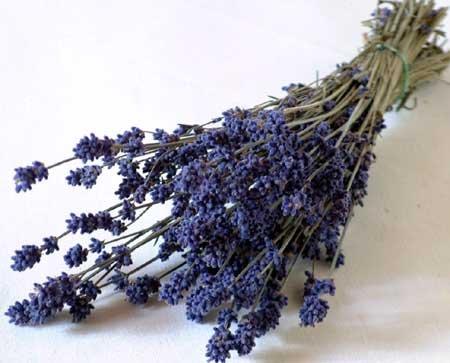 * 花七曜 * 富良野ラベンダー ( 3号 )/ ドライフラワー 花材 ハーブ ナチュラル 紫