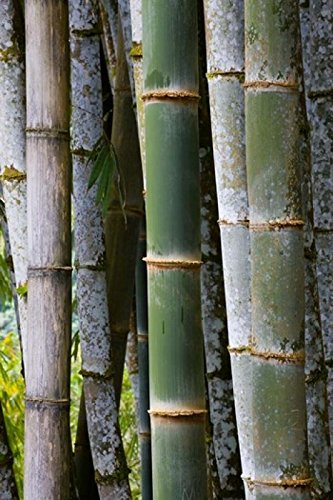 scott-t-smith-danitadelimont-bamboo-jardin-de-balata-martinique-french-antilles-west-indies-photo-pr