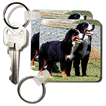 Bernese Mountain Dog - Set Of 2 Key Chains