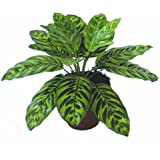 Kunstpflanze Calathea 32cm ohne Topf naturgetreu