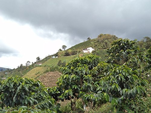 colombian-green-unroasted-coffee-beans-single-origin-micro-lot-farm-el-nivel-10-lb