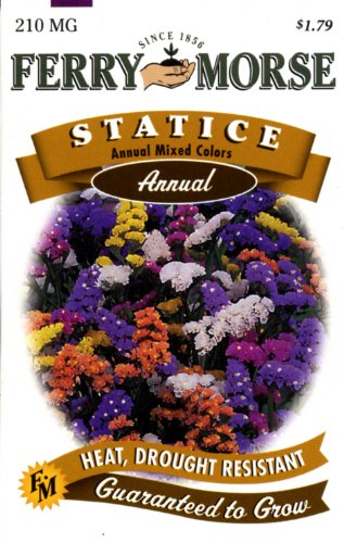 Ferry-Morse Annual Flower Seeds 1148 Statice - Annual Mixed Colors 210 Milligram Packet