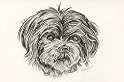 Custom Pet Portrait Graphite Drawing size 4 x 6