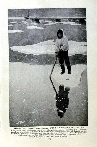 impresion-antigua-del-deporte-esquimal-c1920-que-lleva-en-batea-la-estafa-de-las-pieles-de-foca-del-