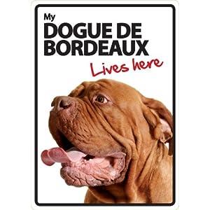 Dogue de Bordeaux Lives Here
