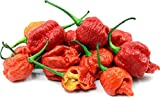 JPK Seed Company Carolina Reaper Pepper HP22B Worlds Hottest Chile Pepper