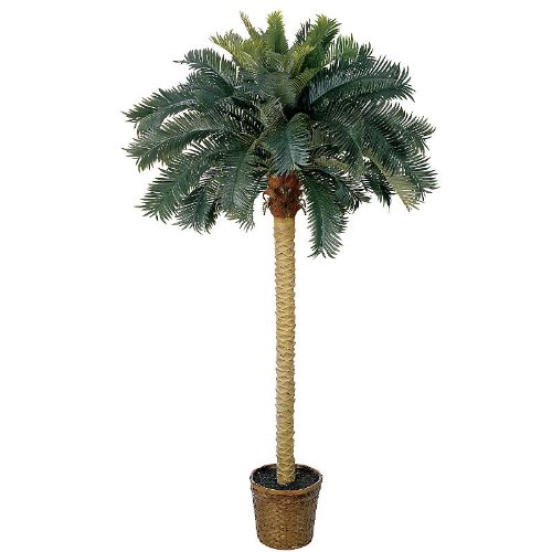 6′ Sago Silk Palm Tree