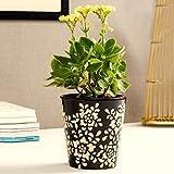Unravel India Ceramic Brown Bucket Planter