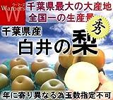 千葉県 白井 梨 新高種 大玉限定 5kg 秀品 贈答用