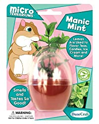 Dunecraft Manic Mint Micro Terrarium Science Kit
