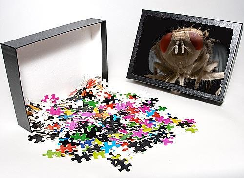 Photo Jigsaw Puzzle Of Lrds-72 House Fly From Ardea Wildlife Pets