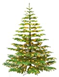 Barcana 7-1/2-Foot Noble Fir Ready Trim Christmas Tree with 550 Clear Mini Lights