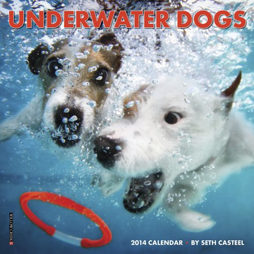 Underwater Dogs Mini Calendar 2014