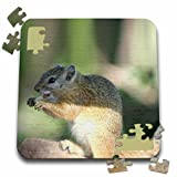 Angelique Cajams Safari Animals - South African Squirrel side view - 10x10 Inch Puzzle (pzl_26819_2)