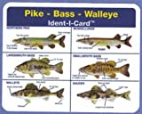Pike - Bass - Walleye Ident-I-Card - Freshwater Fish Identification Card