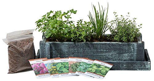 Cedar Wood Planter Box - Complete Mini Herb Garden Kit - Indoor Garden Seeds Growing Kit - Grow Cooking Herbs Basil, Chives, Thyme, Oregano, Parsley & Cilantro - Choice of 2 Colors (Herb Garden Window compare prices)