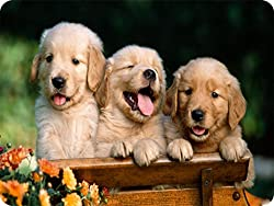 Dogs OE_MOUSEPAD_1718