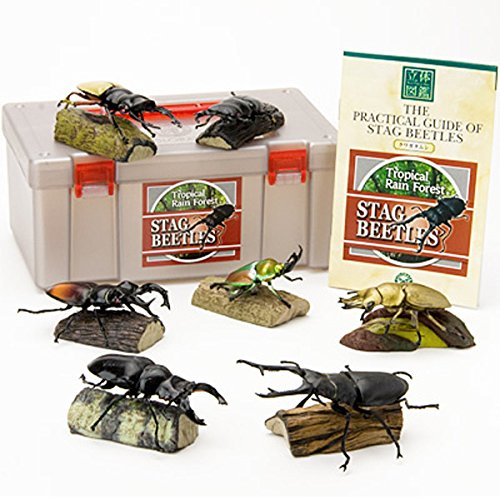 colorata-stag-beetles-real-figure-book-japan-import