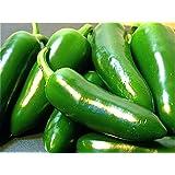 Fooled You Jalapeno Hybrid Pepper - 25 Seeds