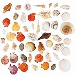 Sea Shells Mixed Beach Seashells - 750 Grams - Quality, Handpicked and Cleaned - Bag of Approx. 50 Seashells