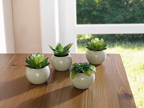 france-cactus-en-pot