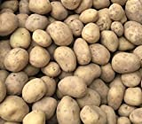 10 Lady Christl First Early Seed Potatoes