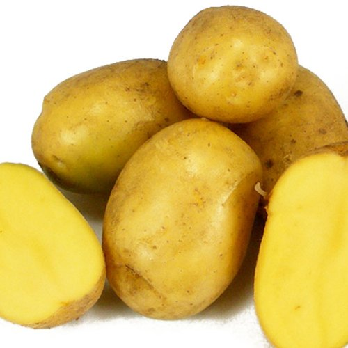 Organic Yukon Gold Seed Potatoes