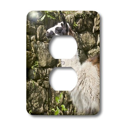 Lsp_86987_6 Danita Delimont - Llamas - Peru, Llama Along The Inca Trail At Machu Picchu - Sa17 Djo0159 - Diane Johnson - Light Switch Covers - 2 Plug Outlet Cover